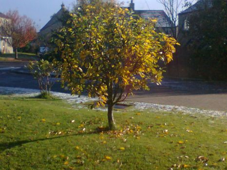 Same Apple-Tree! Different lighting, less snow by LaurenAlex