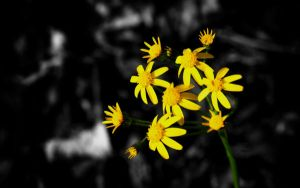 Yellow Spring Flowers by MissMinded