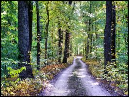Road to nature by MistressVampy