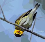 Cape May Warbler by Gingastar18