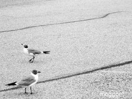 black and white by MOGGGET