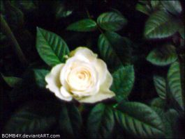 0P: White Rose by BOMB4Y