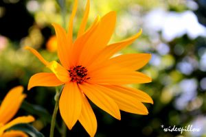 colour : yellow by widexpillow