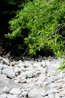 riverbed free background/stock by pengirl389265