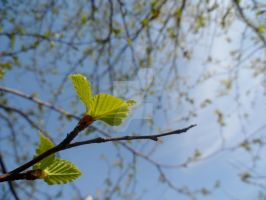 Birch Leaves by TheBirdsFeathers