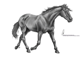 Free Lineart Trotting By Paigepony Greyscale by AquaSalt