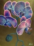 Blue Orchid by MeganGoemann