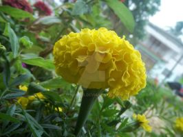 Yellow Flower by momo-pie