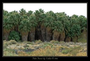 Palm Forest  7936 by Eolhin