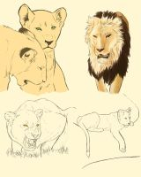 Lion Study by aoi-ryuu214