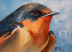 Barn Swallow, Head Study by KathleenCasey