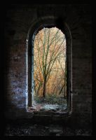 Forest Window by Cavin