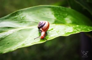Tiny Snail by delsando