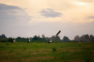 Storks by xrust