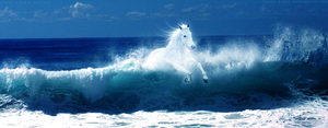 Horse of the Ocean by Crazy-Kiwii