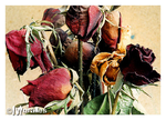 Roses Also Dry by Moralles