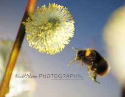 Busy Bee by NickMelson