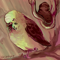 Birb by Beachpie