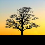 Arbre d'or by nightwibe