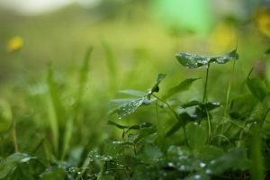 GREEN DEWS by meefro683