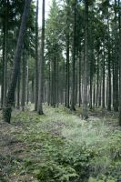 Forest Stock 11 by Sed-rah-Stock