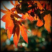 Autumn Spirals by TeaPhotography