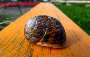 as slow as a snails shell by Madi-Gascarr