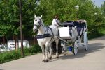 Carriage Horse 5 by BluegrassEquineStock