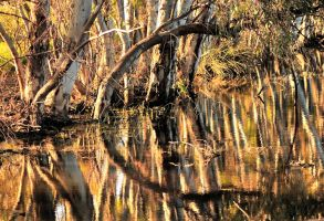 Gums and Reflections 4 by Bluebuterfly72