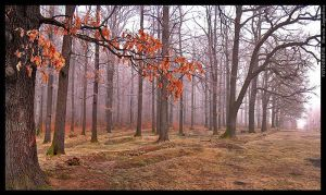 Just forest 2 by mjagiellicz