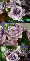 Lavender Rose Waterdroplets Stock 3 by Melyssah6-Stock