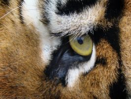 Eye of the Beholder by HeWhoWalksWithTigers