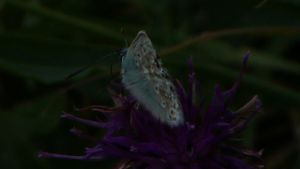 CHALK BLUE by trevj