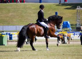 STOCK - Gold Coast Show 361 by fillyrox