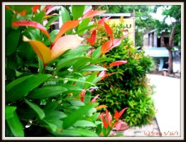 Colorful Bush by katrinaanne