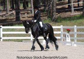 Dressage 006 by Notorious-Stock