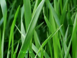 grass blades by Cruxity