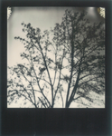 Polaroid 3_16 by Rechbi