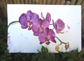 Orchids by lexiibabii01