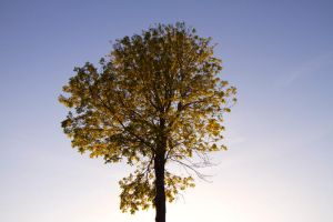 Golden Glow by TakeMeToAnotherPlace