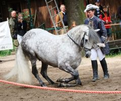 Bowing Dapple Grey Stallion Stock by AngelSTOCK22