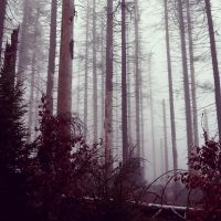 Foggy woods by Noirerora