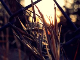 Wheat of Gold. by Colleen33
