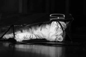 Kitten in Bag no. 2 by Mischi3vo