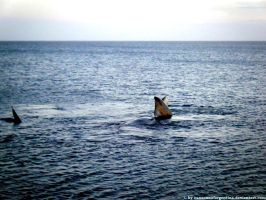 Southern Right Whales 4 by Cansounofargentina