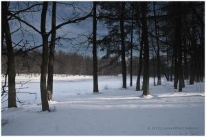 Forest in winter by swiftach