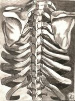 Rib Cage by GretchElise