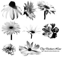 Flower Brush Set 02 by Thy-Darkest-Hour