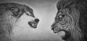 Wolf vs lion - drawing by lyyy971