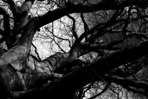 Black and White Tree 3 by Priddlee